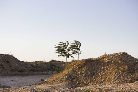 Steppe landscape with two trees at the road construction site.