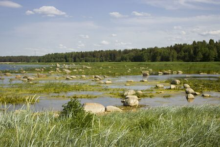 bay with beautiful stones, mud and blooming water against a forest. Summer landscape with a lake. thickets of reed. Standard-Bild