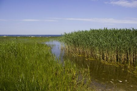 bay with beautiful stones, mud and blooming water against a forest. Summer landscape with a lake. thickets of reed. Standard-Bild - 149933638