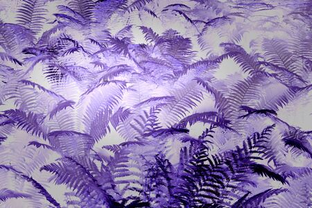 thickets of fern in the forest. leaves grow beautiful patterns, violet background. Standard-Bild