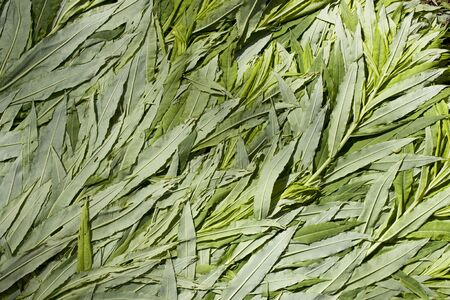 Ivan-tea plant flattened into texture. grass picking time. litter for a tent in the forest. Chamaenerion angustifolium, Epilobium angustifolium Standard-Bild