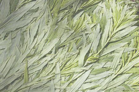 Ivan-tea plant flattened into texture. grass picking time. litter for a tent in the forest. Chamaenerion angustifolium, Epilobium angustifolium. computer processing Standard-Bild