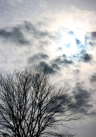 gloomy black and white photography with tree and sky. Tree Branches Against Sky Black and white