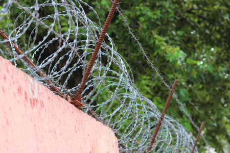 Barbed wire on a pink fence and green foliage. Freedom and independence concept. Nature is under arrest