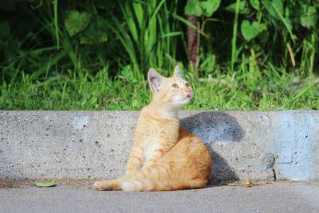 street ginger kitten sits on the road, basking in the sun. summer Standard-Bild