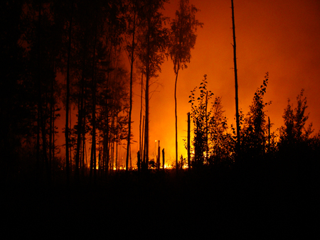 Furious wildfire in the forest Stock Photo