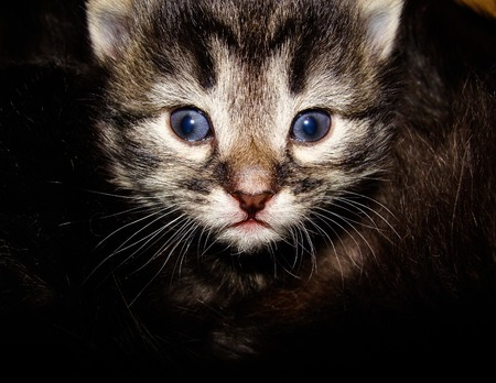 Adorable kitten with blue eyes