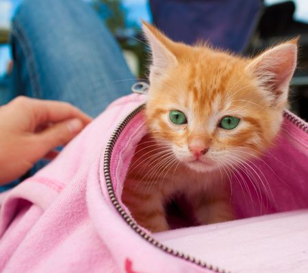 warmth: Curious kitten in Washington looking for cover and warmth