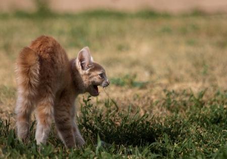 beautiful wild trailer park cats in southern Idaho photo