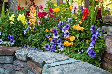 beautiful multiple colored flowers on a rock bed Stock Photo