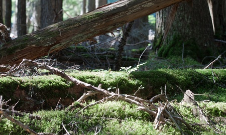 serenety: green vivid moss growing over a dead tree in the forest Stock Photo