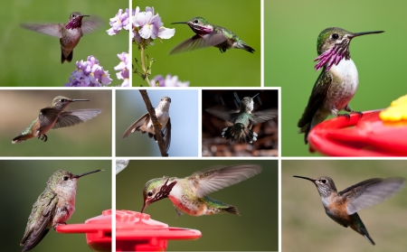 a few different shots of humming birds up close in a collage