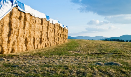 stacks of hay bails on an open field in north idaho