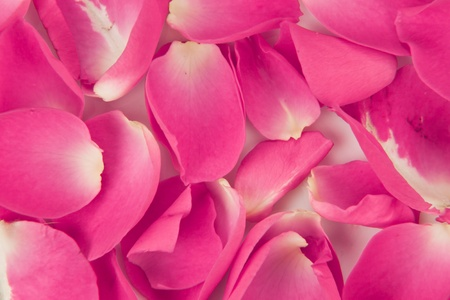 closeup of rose pettals on a flat surface for a holiday backgroud Stock Photo - 11959892