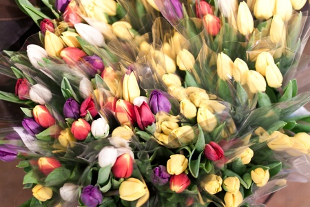 groups of tulips wrapped in cellophane in a store front ready to sell photo