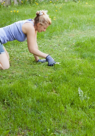 meticulous lawn mowing with scissors in  a large field Фото со стока