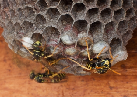 yellow jackets on the move working on their nest with a slow shutter speed to show motion photo
