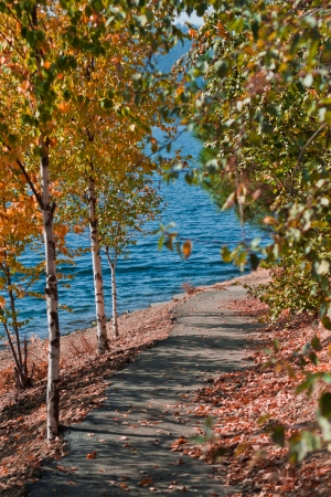quaking aspen: trees changing over the walking path to Coeur d Alene lake in Idaho Stock Photo