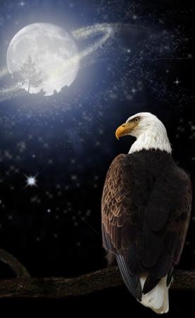 halcones: �guila calva americana sobre un fondo m�gico con stras y anillos en la luna y los anillos en la luna Foto de archivo