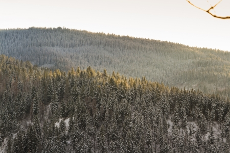 view of a hill side in northern idaho mid december with fresh snow photo