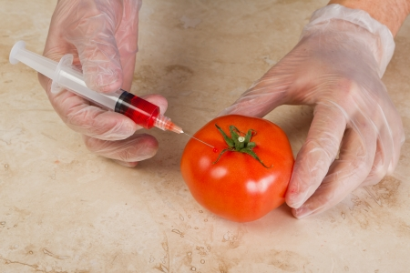 hands injecting a genetically modified tomato with red dye