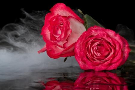 close-up van rode rozen op een zwarte achtergrond met een onderontwikkeld magische achtergrond