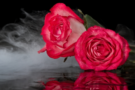 closeup of red roses on a black background with a fogy magical background