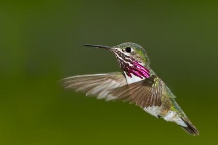 mooie mannelijke zoemende vogel in de lucht met een natuurlijke groene achtergrond