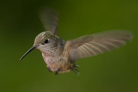 自然の緑の背景を持つ小さなハミング鳥のクローズ アップ 写真素材 - 21359780