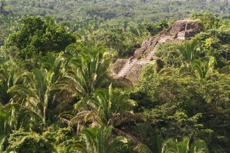 벨리즈의 열 대 정글에서 Lamanai 마 야 유적의 공중보기 스톡 콘텐츠