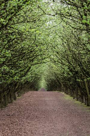 well manicured and maintained hazelnut tree farm in Oregon