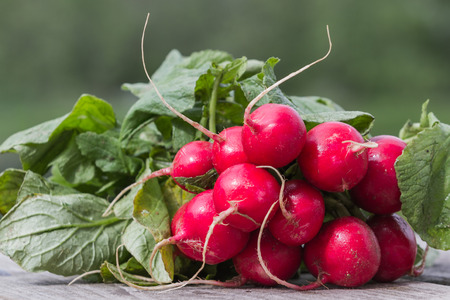 home grown: fresh organic radishes on a wooden board for sale at the local farmers market Stock Photo