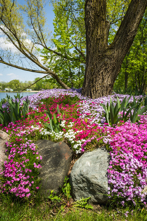 back yard pond: beautiful landscaping with colorful phlox covering the grounds of a large yard