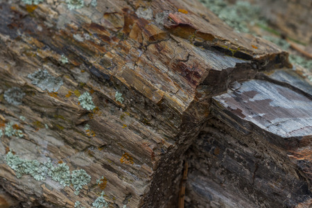 sates: petrified wood found in a forest in South Dakota Stock Photo
