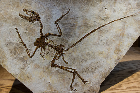 close up of a well preserved dinosaur fossil Фото со стока