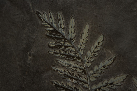 fossilized fern Nauropteris ovate, very well preserved on a dark rock Stock Photo