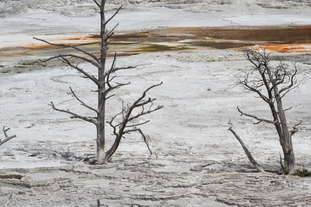 dead trees due to the change in flow of an old mineral water leaving nothing but tree tops and white mineral deposits Stok Fotoğraf