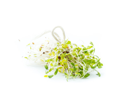macro of a group of organic broccoli sprouts isolated on a white background Reklamní fotografie