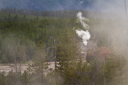 steam vents in yellowstone national park with a green forest for contrast Stock Photo