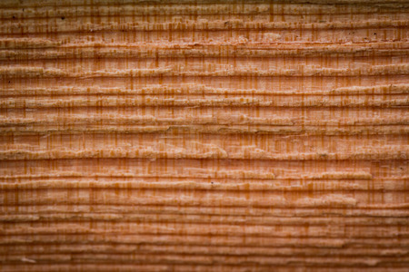 close up of an old tree with visible rings and an abstract pattern photo