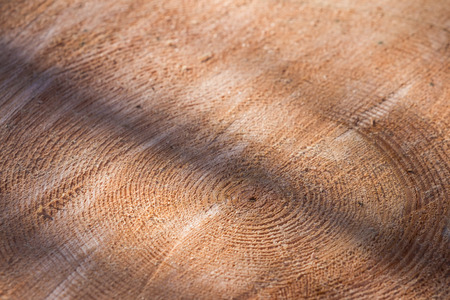 shadowy: close up of a tree round showing the rings of a large tree with a shadowy contrast