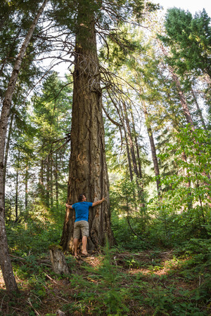 young man hugging a very large Douglas fur tree in the Oregon  forest photo