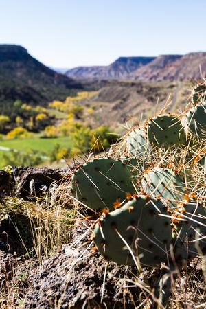 changing color: paisaje des�rtico con tr�os cambiando de color, verde cactus y monta�as de colores