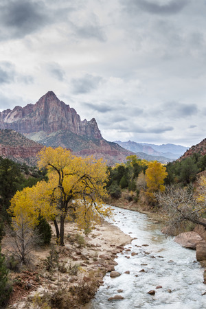 view of the sandstone mountain known as the Watchman in Zion National park with autumn colors and the virgin river photo