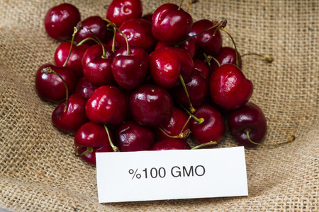 food labeling concept with bright red cherries and a GMO label photo