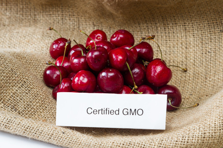 genetically modified organisms: food labeling concept with bright red cherries and a GMO label