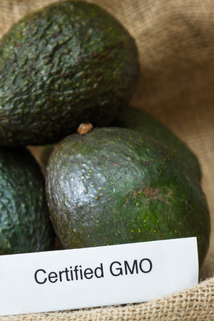 genetically modified organisms: food labeling concept with fresh avocados and a GMO label Stock Photo