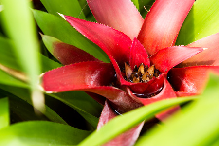 close up of a tropical plant with a bright red center changing into green