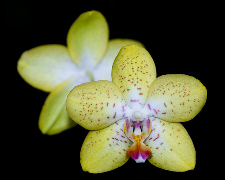 orchid house: close up of a beautiful orchid in a dark green house in Southern California Stock Photo