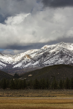 wintering: fresh snow in the high elevation mountains in Southern California